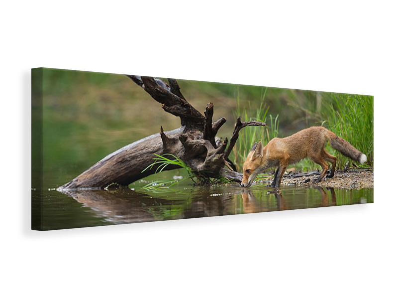 Panoramic Canvas Print Red Fox II