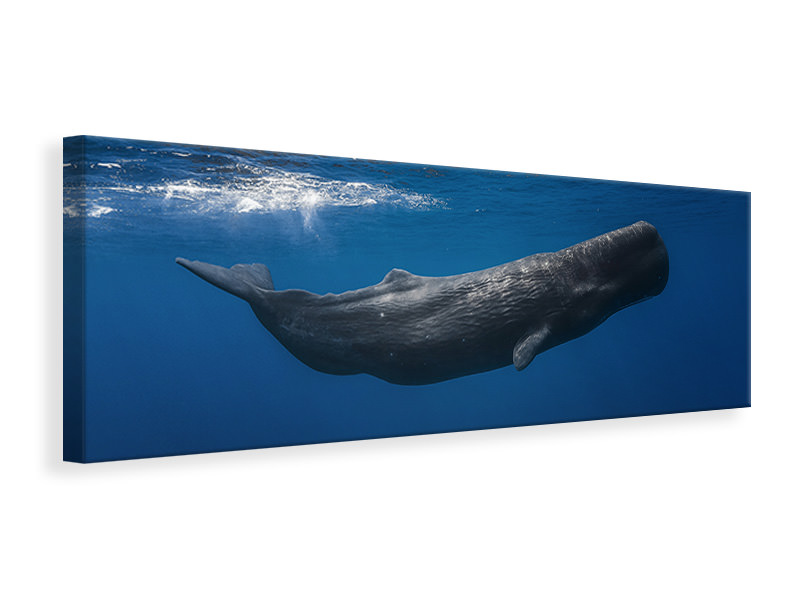 Panoramic Canvas Print Sperm Whale