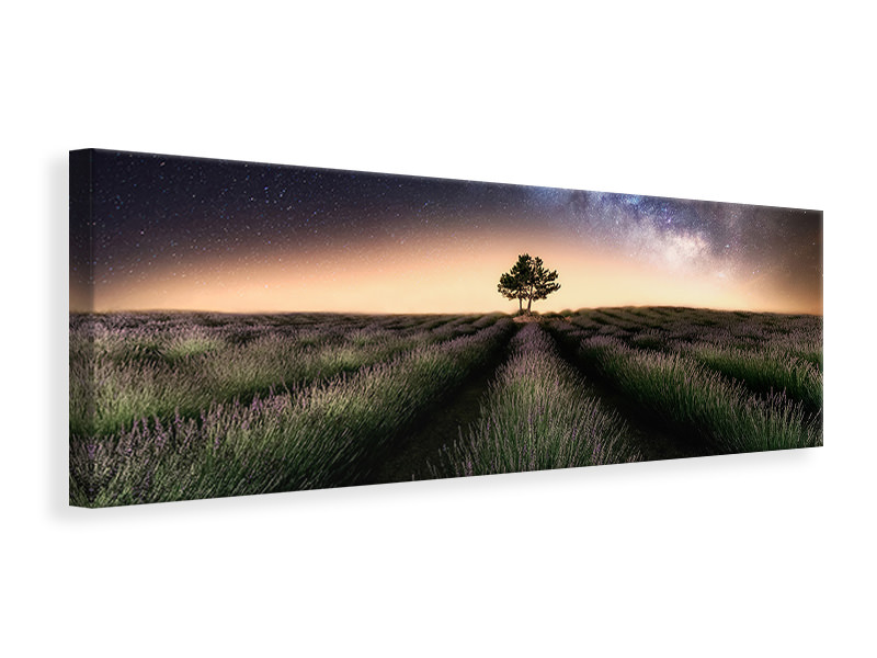 Panoramic Canvas Print Lavender Way