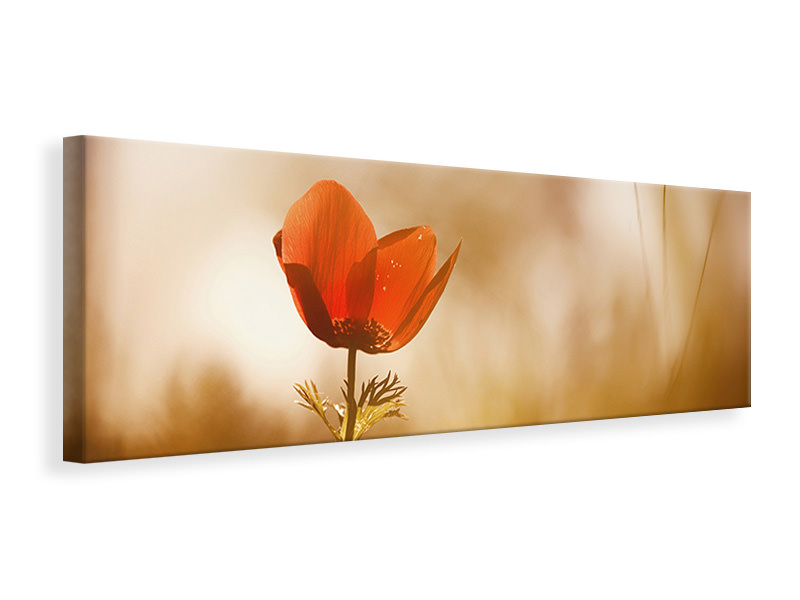 Panoramic Canvas Print Untitled 31