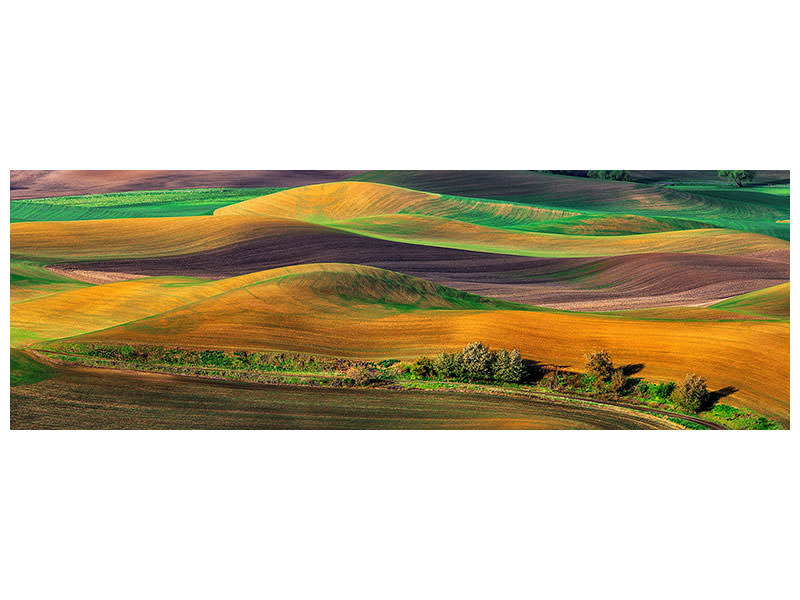Panoramic Canvas Print The Palouse