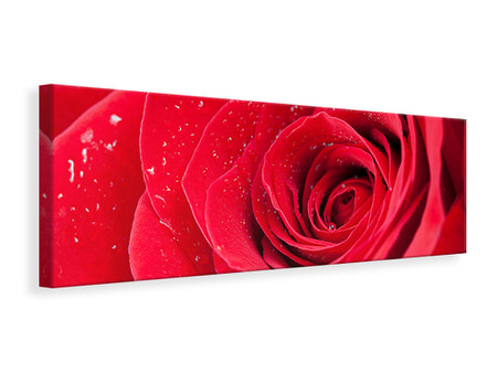 Panoramic Canvas Print Red Rose In Morning Dew
