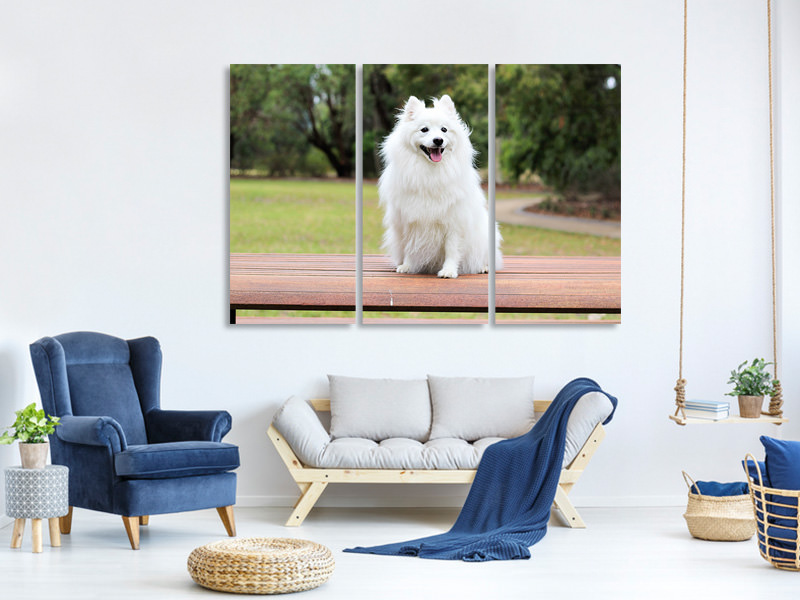 3 Piece Canvas Print The Spitz as a young dog