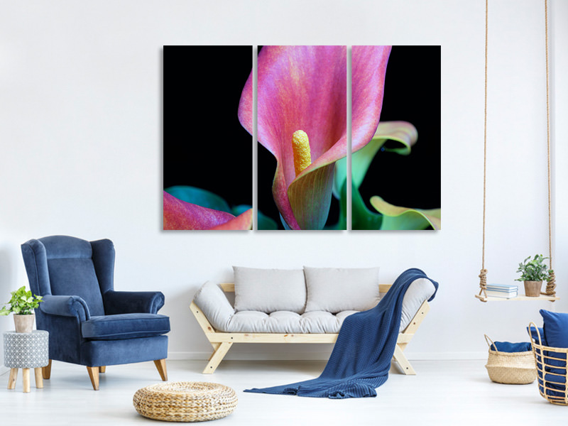 3 Piece Canvas Print Zantedeschien