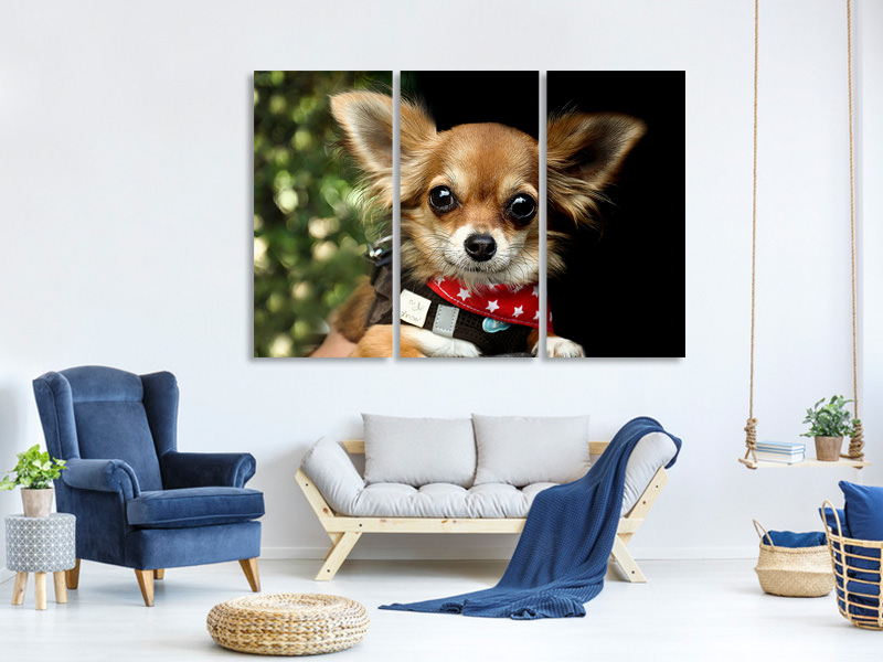 3 Piece Canvas Print Look into my eyes, Small !