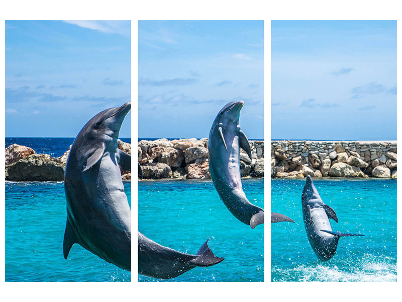 3 Piece Canvas Print 3 dolphins