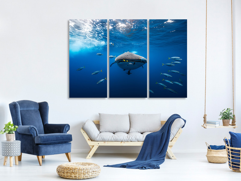 Tableau sur Toile en 3 parties Whale Shark Escorted By A School Of Bonito