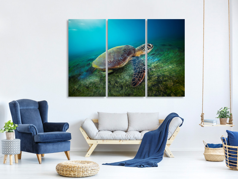 3 Piece Canvas Print Green Turtle