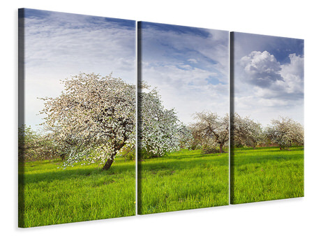 3 Piece Canvas Print Apple Tree Garden