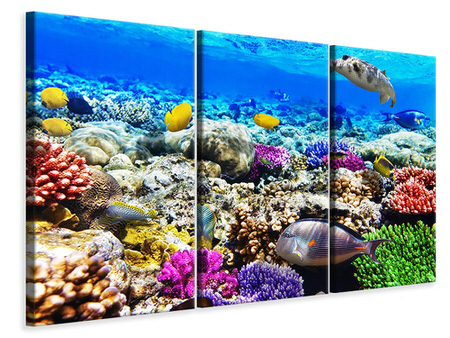 3 Piece Canvas Print Fish Aquarium