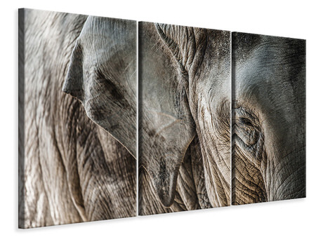 Leinwandbild 3-teilig Close Up Elefant