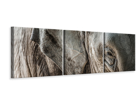 Panorama Leinwandbild 3-teilig Close Up Elefant