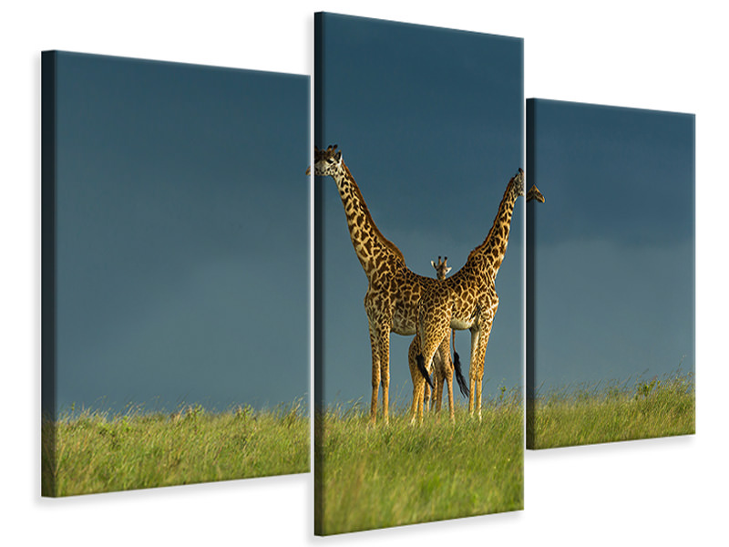 Modern 3 Piece Canvas Print Between The Two
