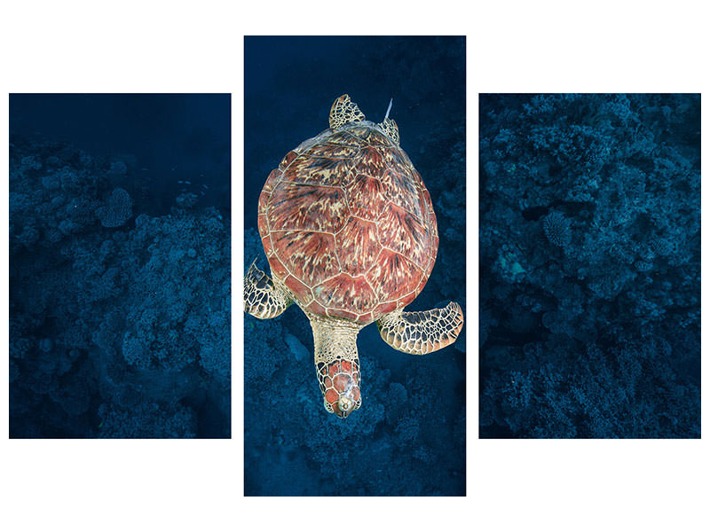 Modern 3 Piece Canvas Print Green Turtle On Blue Water