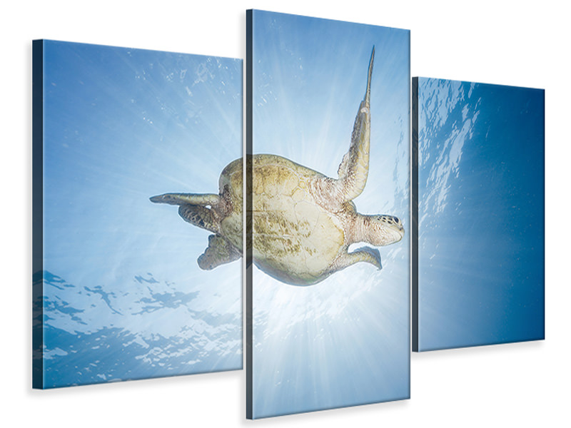 Modern 3 Piece Canvas Print Sea Turtle - Green Turtle