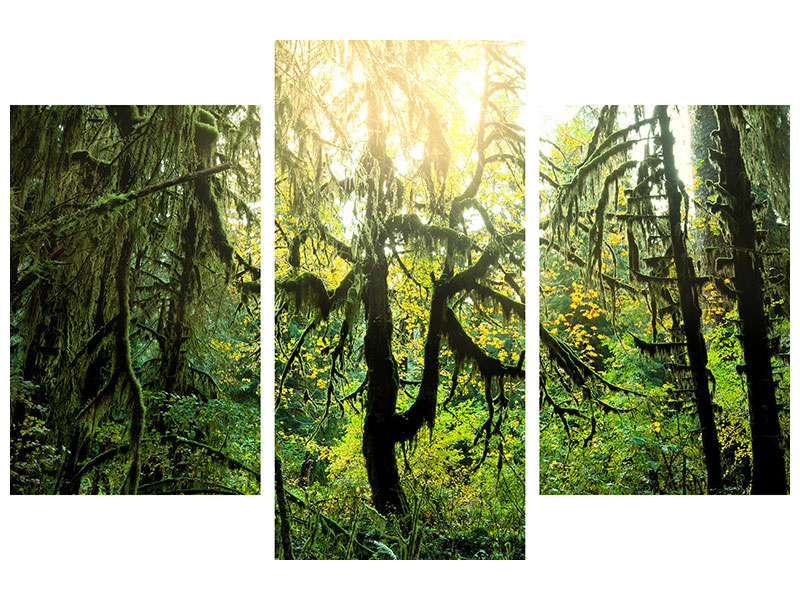 Modern 3 Piece Canvas Print Dreamy Forest