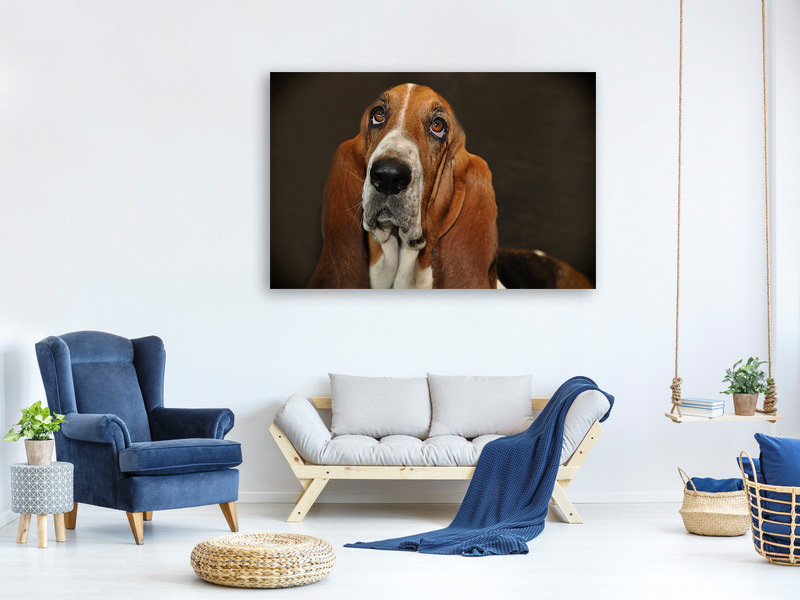 Canvas print Typical basset