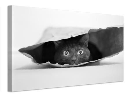 Canvas print Cat in a bag