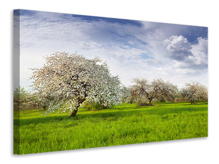 Canvas print Apple Tree Garden