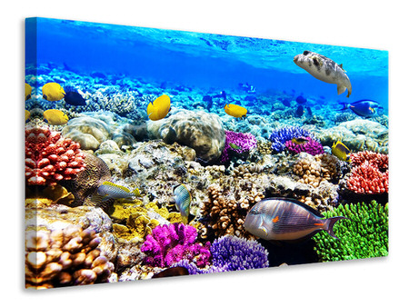 Canvas print Fish Aquarium