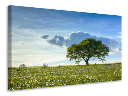 Canvas print Spring Tree