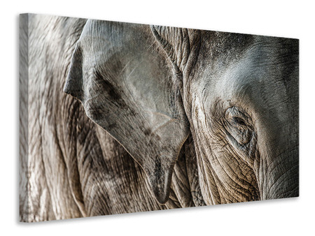Canvas print Close Up Elephant