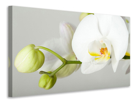 Canvas print Giant Orchid