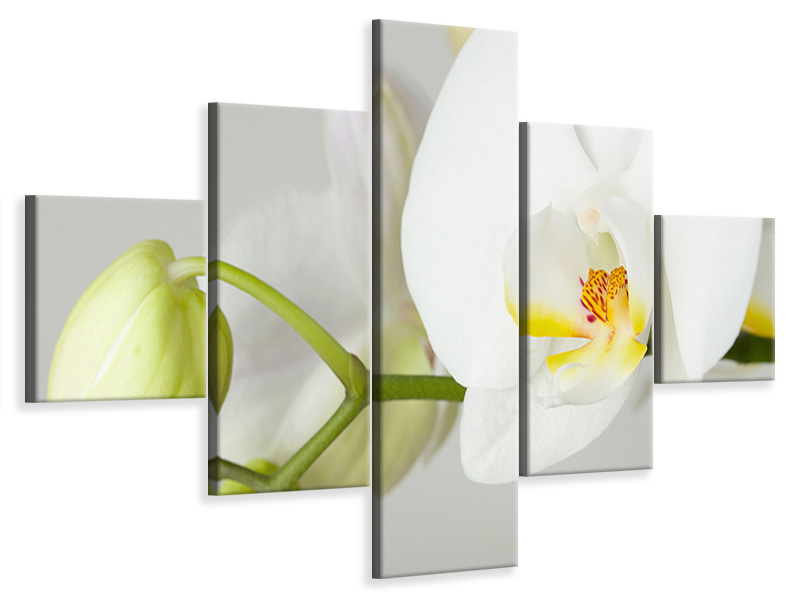 5 Piece Canvas Print Giant Orchid
