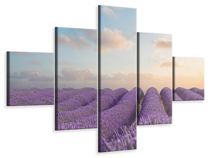 5 Piece Canvas Print The Blooming Lavender Field